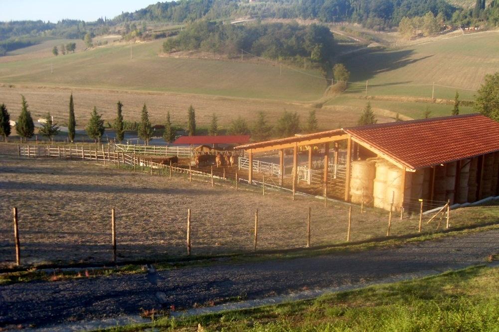 la fattoria bellesi alberto